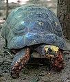 Santa Cruz water Park bird enclosure at 450m - Hello Mr Turtle-Tortoise ?? (24213722684).jpg