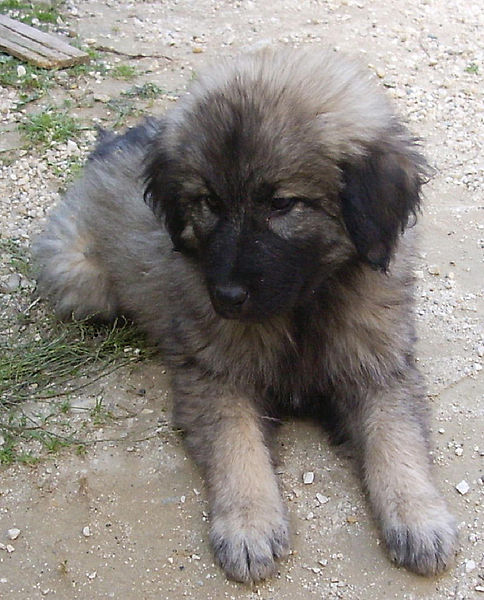 Romanian Dog Rescue South West