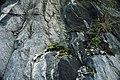Schist & amphibolite (Ordovician; Marlboro West Route 9 roadcut, Vermont, USA) 3.jpg
