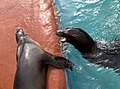 Sea Lions (5017606779).jpg