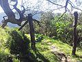 Sentier du cassé de la rivière de l'est - panoramio.jpg