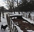Shiba at Gappo Park, Aomori.jpg