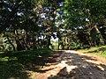 Shikanoshima Park on Shikanoshima Island.jpg