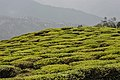 Shree Dwarika Tea Estate, Darjeeling 01.jpg
