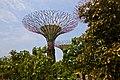 Singapore, Gardens by the bay - panoramio (8).jpg