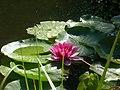 SivanandaAshramLotus Val-MorinQC 20070805.jpg