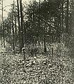 SkullsAtWilderness1864.jpg
