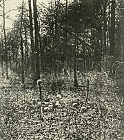 SkullsAtWilderness1864