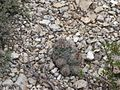 Small cactus on ground.jpg