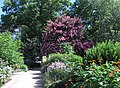 Smithsonian Gardens in July (20093543021).jpg