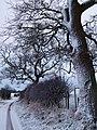 Snowy trees - geograph.org.uk - 1639332.jpg