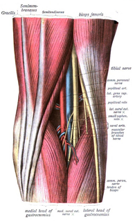 Popliteal fossa The back of your knee