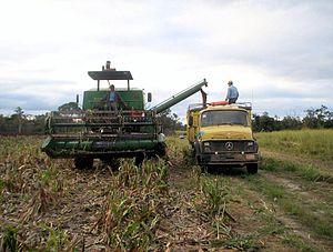 Alto Paraguay Department - Sorghum harvest 2008, Linea 14, Agua Dulce Region