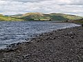 Southern Shore of St. Mary's Loch - geograph.org.uk - 219119.jpg