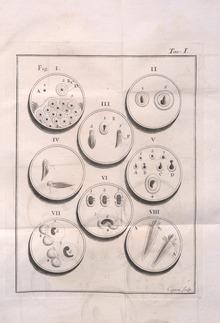Dissertazioni di fisica animale e vegetabile, 1780 (Da BEIC, biblioteca digitale.)