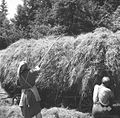 Spravljanje sena pri Opaldarju, Male Lipljene 1964 (5).jpg