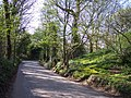 Spring in Long Hey's Lane - geograph.org.uk - 1262220.jpg