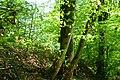 Squirrel @ Châtillon-sur-Cluses @ Hike to Mont Orchez (47796915312).jpg