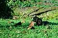 Squirrel Having Its Dinner (28674921).jpeg