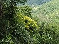 Sri Lankan Beauty By Chandupa Weerakkody CSW HD.jpg