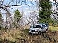 Starr-101006-9201-Sequoia sempervirens-habit with Tahoe-Polipoli-Maui (24936408952).jpg