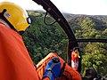 Starr-141014-2190-Caesalpinia decapetala-aerial view-Kakipi Gulch Haiku-Maui (25154034861).jpg