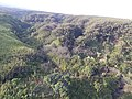 Starr-141014-2200-Caesalpinia decapetala-aerial view-Kakipi Gulch Haiku-Maui (24879546109).jpg