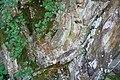 Steile und verformte Schieferschichten, Taunusrand zwischen Fachingen und Balduinstein.jpg