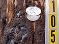 Still Life with Telephone Pole and Plaques - Hood River - Oregon - USA.jpg