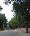 Street around Palani Temple1.jpg