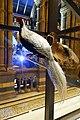 Stuffed pheasant (38510906790).jpg