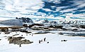 Summer is coming (to antarctica) (15400497337).jpg