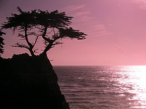 Sunset at cyprus point on pebble beach.jpg