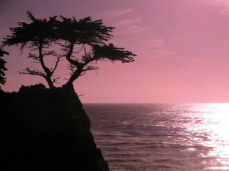 File:Sunset at cyprus point on pebble beach.jpg