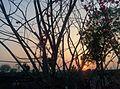 Sunset landscape 2.jpg