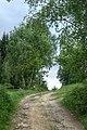 Svépravice, lesní cesta II.jpg