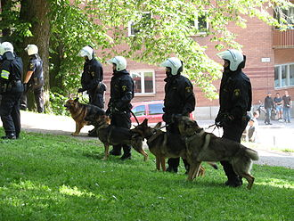 Police dog - Swedish German Shepherd dogs in action during demonstrations in Stockholm on National Day 2007.