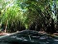Túnel de Bambus - panoramio.jpg