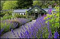 The 'Potting Shed' restaurant, Applecross. - panoramio.jpg