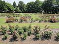 The Arno rose garden, Oxton - IMG 0899.JPG