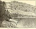 The Pine-tree coast (1891) (14782602225).jpg
