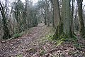 The Ridge of Frith Wood - geograph.org.uk - 344375.jpg