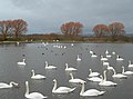 The Whooper Pond - geograph.org.uk - 326009.jpg