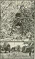 The Wilson bulletin (1921) (14772296143).jpg