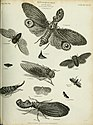 The cyclopaedia; or, Universal dictionary of arts, sciences, and literature. Plates (1820) (20795447646).jpg