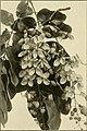 The ornamental trees of Hawaii (1917) (14742960726).jpg