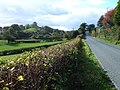 The road to Bettws - geograph.org.uk - 586883.jpg