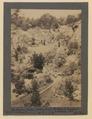 The sunken garden (looking east), Butchart's Gardens, Victoria, British Columbia (HS85-10-42133) original.tif