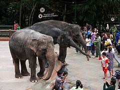 Bogor – Travel guide at Wikivoyage