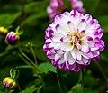 Thuya Gardens (15584608660).jpg